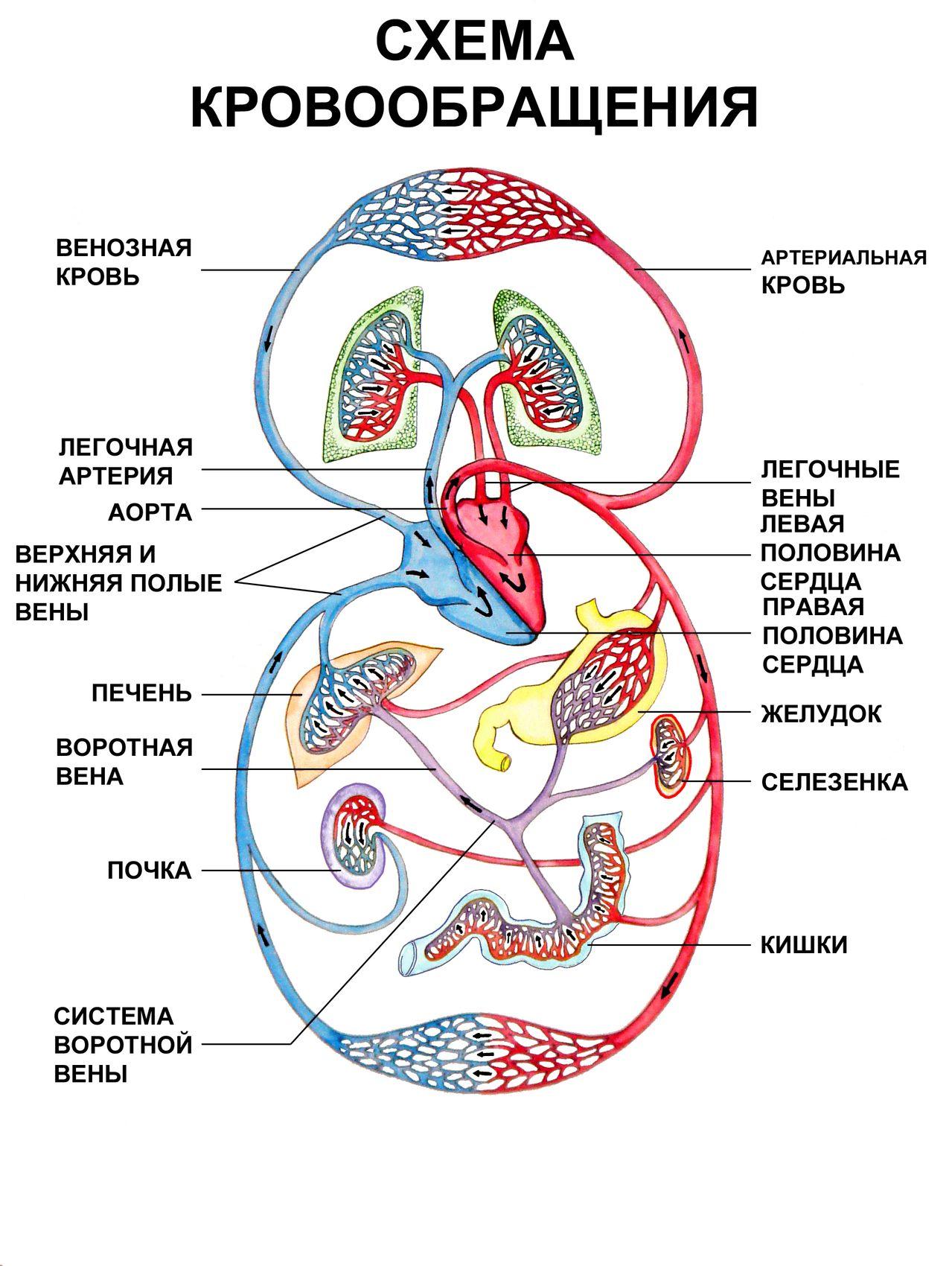 hipertenzijos taškai masažui)