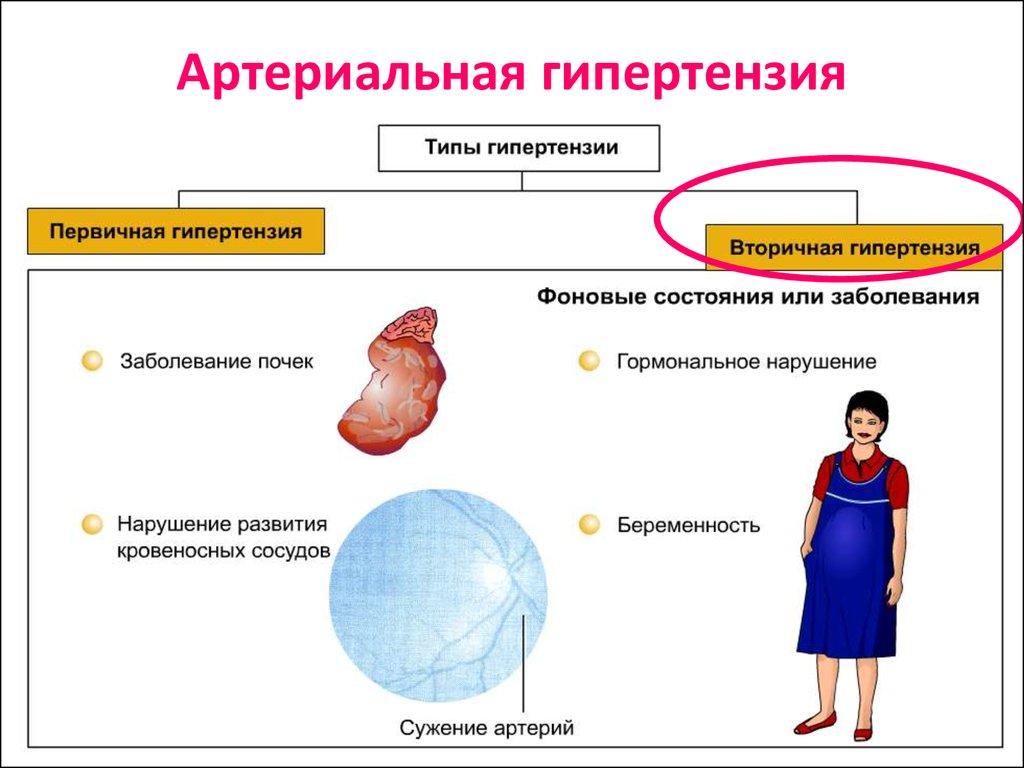 Cholesterolio tabletės - Anatomija November