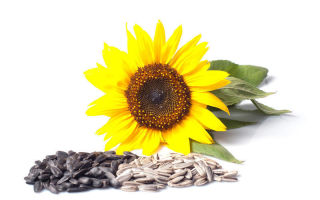 saulėgrąža hipertenzijai gydyti emalis nuo hipertenzijos